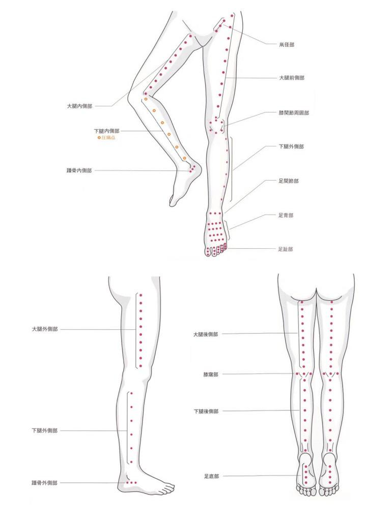 図1.下肢の基本圧点分布図