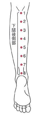図1. 下腿後側部8点