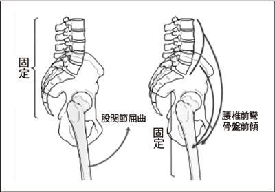 図4.腸腰筋の作用