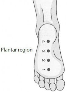 4 points of plantar region