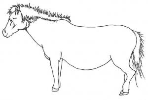 図1 地上での与那国馬の腹部